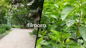 Filmora Go Mod Apk- wondershare- clearly